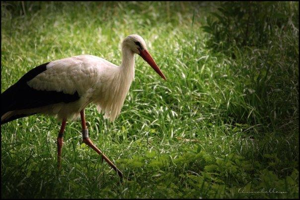Annabelle WERLE, Parc des cigognes de Hunawihr (68)